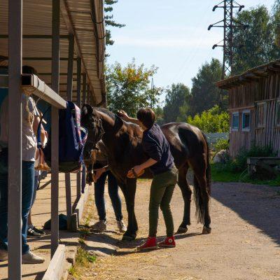 Чистка лошадей перед соревнованиями